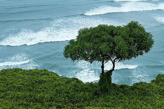 A Tree Grows in Lima by Patricia Bolgosano