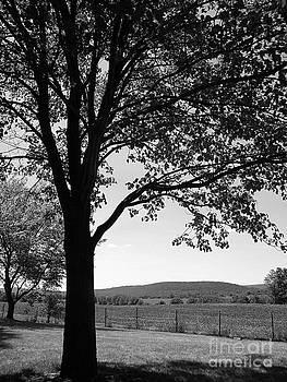 A Tree in Vermont by Lorraine Heath