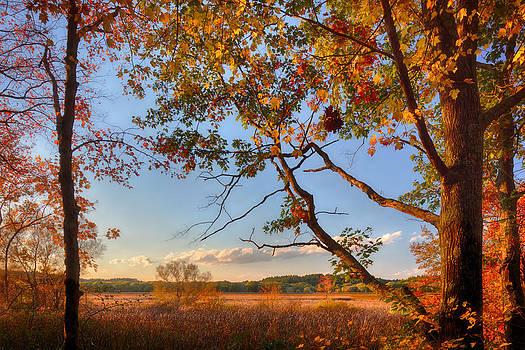 Sylvia J Zarco - A Trees View of Autumn on the Marsh