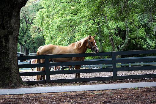 A Very Beautiful Hilton Head Island Horse by Kim Pate