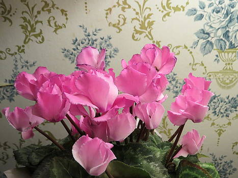 A Vintage Look Pink Cyclamen Flowers  by Elisabeth Ann