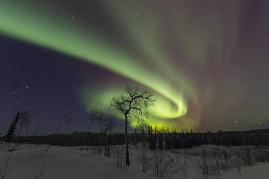 Tim Grams - A Vortex of Auroras