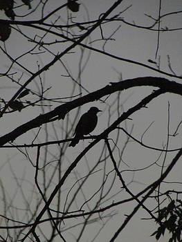 A Walk In The Park - Bird by Bridget Johnson