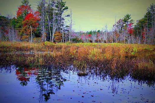 A Walk in the Woods by Ellen Ryan