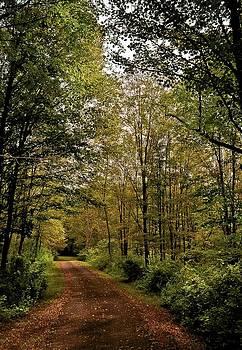 A Walk in the Woods by Garett Gabriel