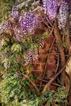 A Wall Of Wisteria by Wobblymol Davis