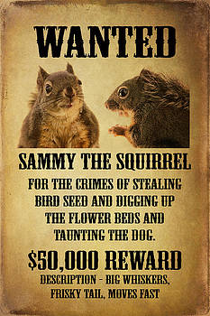 Peggy Collins - A Wanted Squirrel