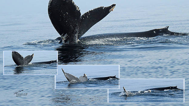 A Whale and Her Tail by Steph Maxson