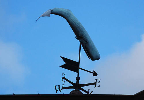 A whale in Nantucket by Lorena Mahoney