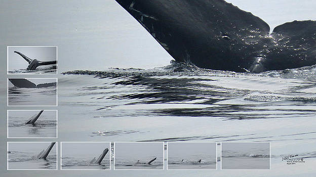 A Whale of a Tail by Steph Maxson