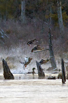 A Winter Morning Flight by John Stoj