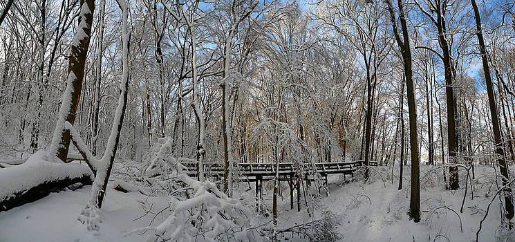 Raymond Salani III - A Winter Scene