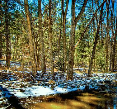 A Winter Woodland by Helene Kobelnyk