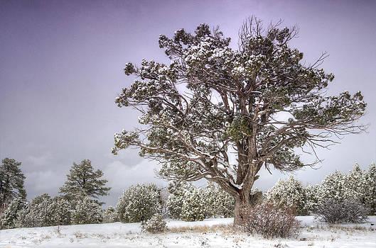 Saija  Lehtonen - A Winter
