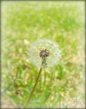 A Wish by Lorraine Heath
