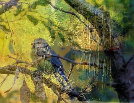 Rick Todaro - A Wonderful Gift Nature