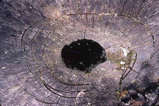 A Wooden Black Hole by Thomas D McManus