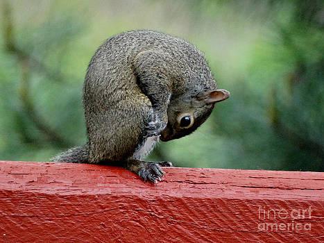 AAAWWW Nuts by Scott B Bennett