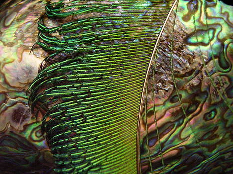 Abalone and Peacock Feather by Yvette Pichette