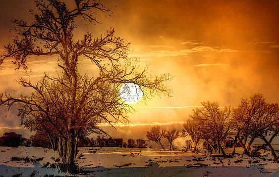 Abandoned Farm  by Andrea Lawrence