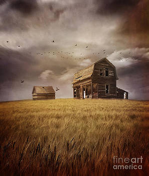 Sandra Cunningham - Abandoned house on the prairies in a field of wheat