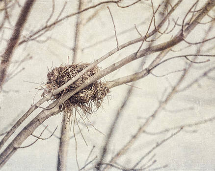 Lisa Russo - Abandoned Nest in a Tree