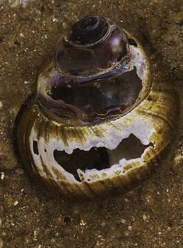 Dawn Hagar - Abandoned Shell