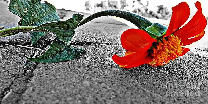 Abanon Sidewalk Flower by Samantha Radermacher