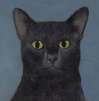 Abby the cat by Francis Ashley