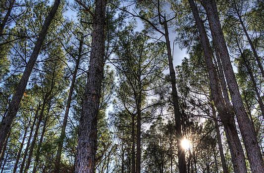 Lisa Moore - Above the Trees II