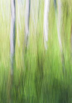 Abstract Alder by Ross Murphy