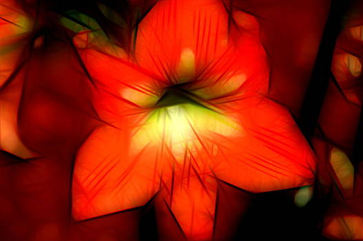 Ronald T Williams - Abstract Amaryllis Fractile