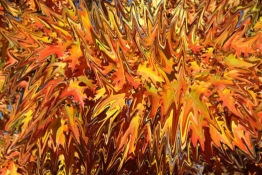 Abstract Autumn Oak by James Hammen
