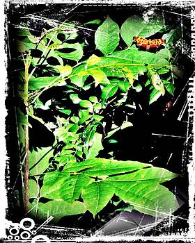 Abstract Butterfly by Stephani Vaughan