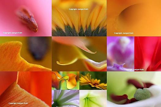 Juergen Roth - Abstract Fine Art Flower Photography