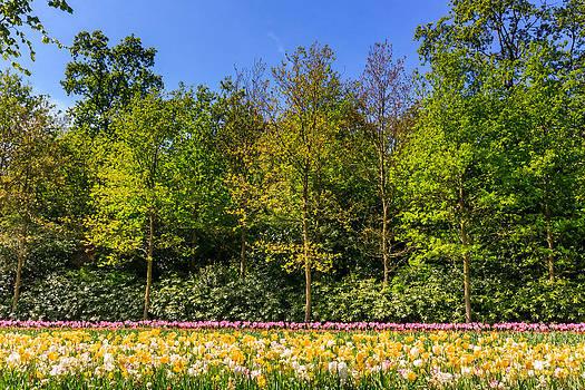 Abstract Garden by Susan Leonard