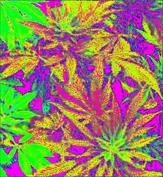 Abstract Green N Pink by David Munoz