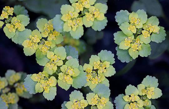 Dreamland Media - Abstract Macro Flowers
