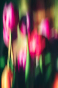 Abstract of Colorful Tulips by Michelle Gross