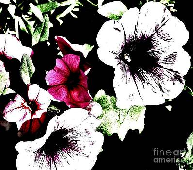 Abstract Petunias by Marsha Heiken
