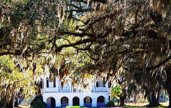 Charleston sc Ace Basin Plantation by Ella Char