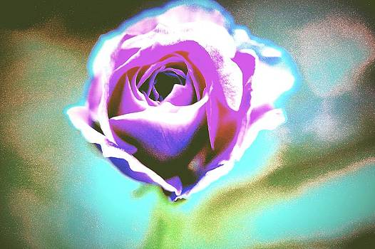 Acid Rose by  Jeff Mantz Rhodes