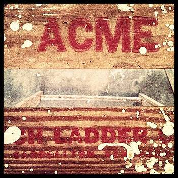 Acme by Larissa Holderness