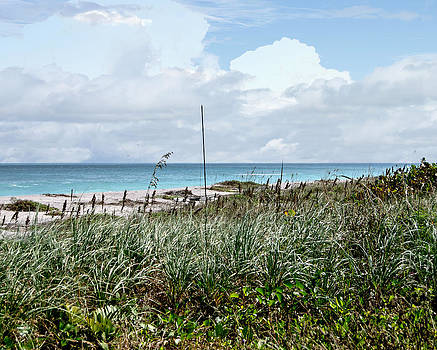 Judy Hall-Folde - Across the Dunes at Hobe Sound