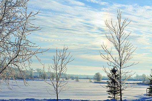 Across the Field in Winter by Lisa  DiFruscio
