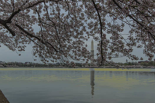 David Hahn - Across the Tidal Basin