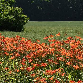 Adamsville Lilies by Jim Cotton