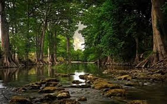 ADEYEMI FAWOLE - Forest by ADEYEMI FAWOLE Hamilton Adeyemi Fawole NZ