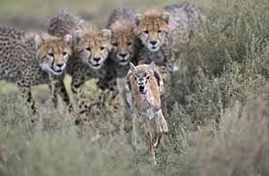 Adeyemi Fawole - Hunting by ADEYEMI FAWOLE Hamilton Adeyemi Fawole NZ