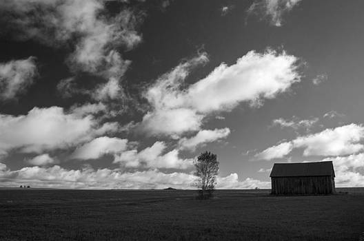 Adirondack Barn and Tree Black and White by Nancy De Flon